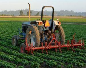 Daniel Constantin: Agricultura va avea de castigat daca se relanseaza consumul