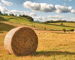 PNDR 2014-2020: Producatorii agricoli pot contracta credite cu garantia FNGCIMM