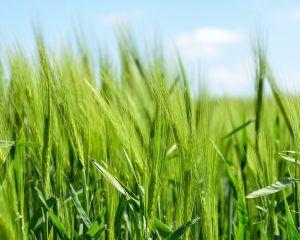 Romania si Republica Moldova au semnat un Plan de actiuni privind agricultura si industria alimentara