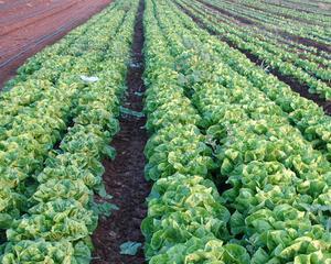 AGROSTAR sustine reducerea TVA la alimente la 5%
