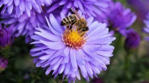 Sprijin financiar de 20 de lei pe familie de albine pentru apicultorii afectati de fenomene hidrometeorologice nefavorabile