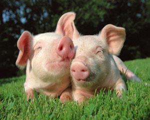 Analiza: Cat de greu le este vegetarienilor sa afle ca...