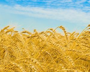SONDAJ RENTROP & STRATON MARKET RESEARCH: Agricultura, principala atractie pentru potenţialii antreprenori