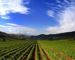 Asigurarile agricole, un segment de real interes pentru asiguratori
