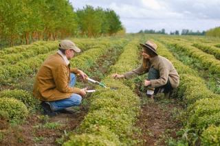 O banca din Romania acorda credite fermierilor preocupati de agricultura sustenabila