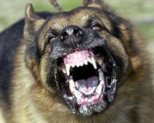 """""""Legea lui Ionut"""", campanie pentru rezolvarea problemei cainilor agresivi fara stapan"""