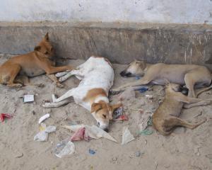 """Adapostul de animale Mihailesti: Sterilizarea animalelor, de patru ori """"mai ieftina"""" decat salariile angajatilor adapostului"""