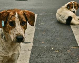 Cazul copilului omorat de caini: Parchetul General a preluat ancheta
