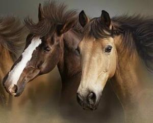 ANALIZA: Statul a renuntat la sectorul zootehnic, dar creste 2 cai in Dambovita