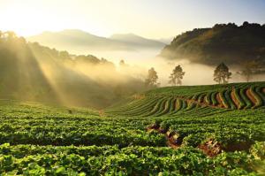 Top 7 culturi agricole profitabile pe care le poti infiinta pe suprafete mici