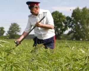 Care este prima tara in care productia si vanzarea de marijuana va deveni legala