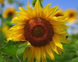 Cargill investeste 200 milioane de dolari intr-o fabrica de ulei de floarea soarelui situata in Rusia