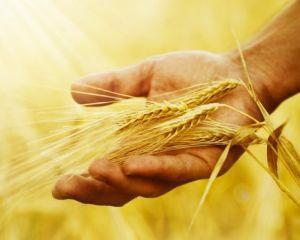 De la 1 martie, APIA vizeaza carnetele de rentier agricol