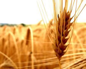 Bloomberg: Decizia Romaniei de a bloca exporturile de cereale creste temerile privind aprovizionarea cu alimente la nivel global