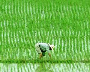 China vrea sa mute 250 milioane de locuitori din mediul rural la oras