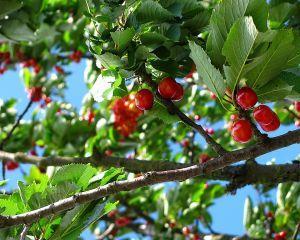 Ce problema are Romania in sectorul de fructe si legume