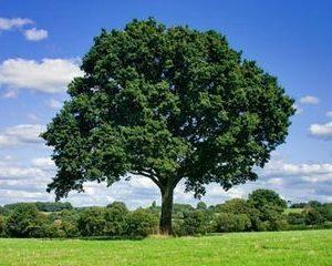 Copacul din cutia de scrisori