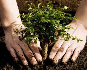 Fundatia UPS vrea sa planteze un milion de copaci in intreaga lume