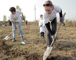 9.000 de copaci, plantati de Romtelecom si Cosmote