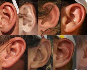 Cum recunosti un lider? Dupa lobii urechilor...