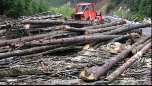Ministrul Mediului: Nu este zi lasata de la Dumnezeu in care sa nu primesc mesaje despre taieri ilegale de lemn