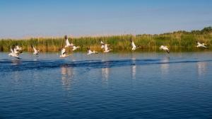 Pentru vacantele de Paste si 1 Mai, pensiunile si hotelurile din Delta Dunarii au grad de ocupare de 90%