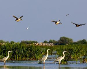 Romania, Ucraina si Moldova iau bani europeni pentru protejarea Deltei Dunarii