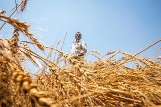Fermierii afectati de seceta vor fi despagubiti de stat. Peste 1 milion de hectare au fost afectate de lipsa ploilor