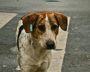 Curtea Constitutionala a Romaniei, unda verde pentru eutanasierea cainilor fara stapan