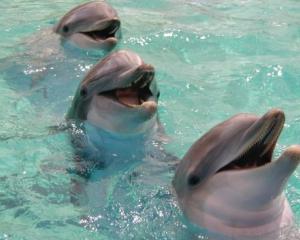 """Delfinii """"se striga fiecare pe nume"""""""