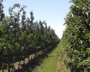 Domeniile Ostrov, crestere de 80% a vanzarilor de fructe