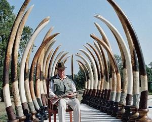 Ifosele de mari vanatori ale unor miliardari ameninta elefantii cu disparitia