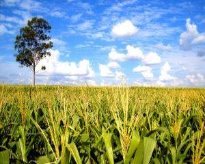 Micii fermieri vor sa renunte la pamant. Care este motivul