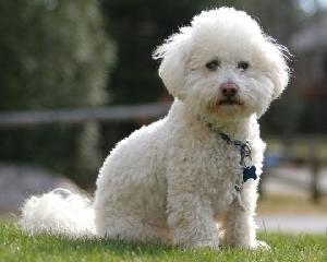 UE simplifica legislatia care reglementeaza calatoriile cu animale de companie