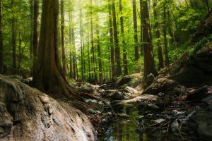 Greenpeace Romania lanseaza Forest Guardians, aplicatia prin care pot fi raportate taierile ilegale de paduri