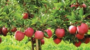 Bani pentru producatorii de fructe care nu au mai facut exporturi in Rusia