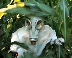 Birocratii europeni au dat unda verde culturilor cu Organisme Modificate Genetic