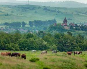Cel mai mare eveniment dedicat sasilor din Romania, Saptamana Haferland, 6 - 10 august 2015