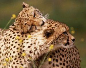 """Sfasietoarea bucurie trista a unei... """"iubitoare de animale"""""""
