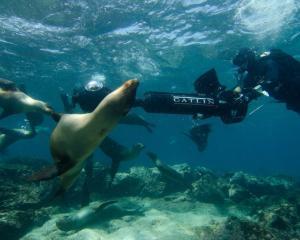 Street View aduce imagini inedite din Galapagos
