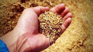 ROCA devine actionar la RDF Arad, unul dintre principalii traderi de cereale din Romania