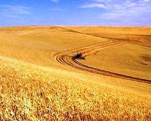 Dacian Ciolos: Tarile trebuie sa notifice Bruxelles-ul deciziile privind noua Politica Agricola Comuna