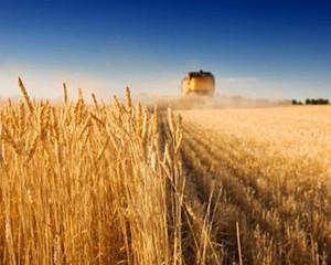 In 2013, productia agricola a Romaniei a valorat 78,46 miliarde de lei