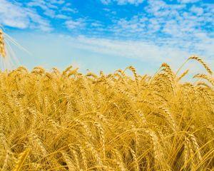 Fermierii pot depune la APIA cererile unice de plata pentru 2015