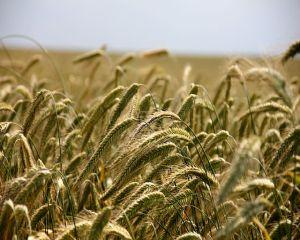 Procedura de reducere a normei de venit pentru activitatile agricole