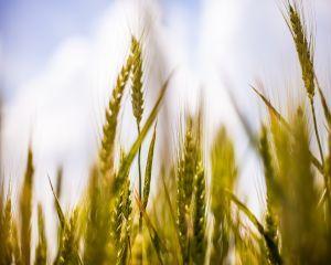 APIA elibereaza fermierilor adeverinte pentru credite