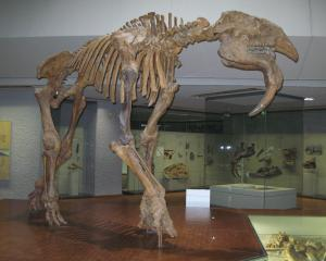 Deinotherium gigantissimum, teribilul animal vine la Antipa