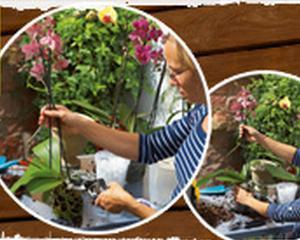 """Orhideea """"infloreste"""" in afacerile Hornbach"""