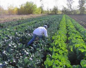 Vanzarea terenurilor agricole catre straini ne compromite siguranta alimentara