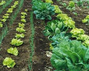 In 2014, Romania poate avea cea mai mare productie agricola din ultimii 27 de ani